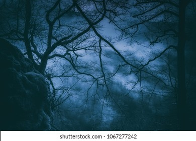 spooky trees with scary branches at night