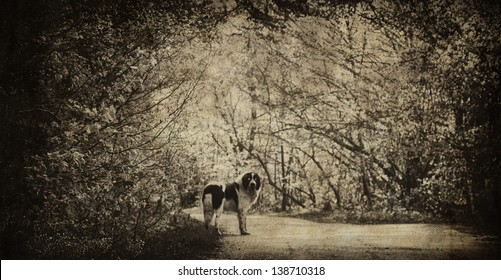spooky vintage forest with big ghostly dog