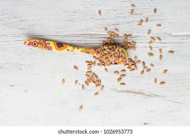 spoon with einkorn grains
