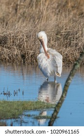 Spoonbill fishing in the lake