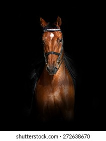 Sport dressage horse over a black background in front view
