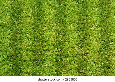 sport grass patch