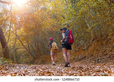 Sport Healthy. Autumn nature hiker team young sporty women walking in national park with backpack outdoors. Woman tourist going camping adventure in forest, select focus.  Travel Concept