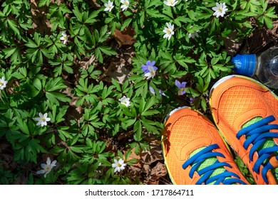 Sport shoes and bottle of water on fresh green grass in tpark. Concept healthy lifestyle, active, sport and dieting. Outdoors sport. Sport equipment. Copy space