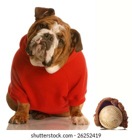 sports hound - english bulldog with baseball and glove