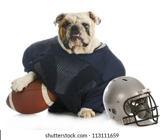 sports hound - english bulldog dressed up like a football player on white background