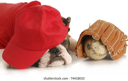 sports hound - english bulldog wearing red shirt and hat over eyes with baseball and glove on white background