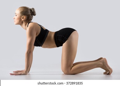 Sporty beautiful young woman practicing yoga, working out, doing backbend in Cow posture, Bitilasana, exercise for flexible spine and shoulders, asana paired with Cat Pose on the exhale, studio