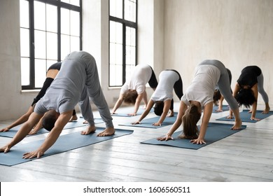 Sporty diverse young people doing Downward facing dog exercise at group lesson, practicing yoga, standing in adho mukha svanasana pose, working out in modern yoga studio with male instructor