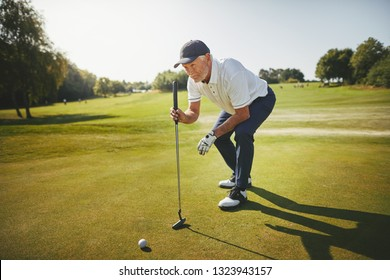 Sporty senior man crouching on a green planning his putt while enjoying a round of golf on a sunny day