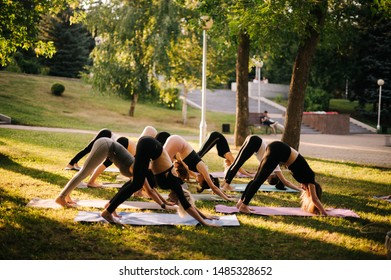 Sporty women are practicing yoga, stretching in Downward Facing Dog exercise, Adho Mukha Svanasana pose. Group of people are doing yoga pose downward facing dog pose on yoga mats at green grass