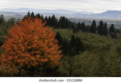 A Spot of Autumn Color in the Willamette Valley