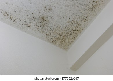 Spot of mold, mould, mildew or fungas on the white plaster surface of ceiling interior room.