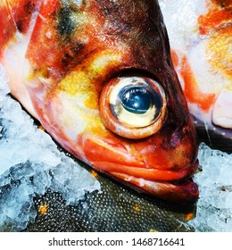 Spotted colored fish head with a big eye on a fish market counter