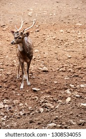 spotted dear standing