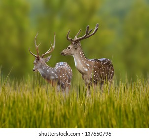 Spotted deer alerted