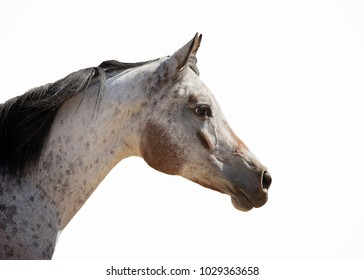 Spotted Horse Head