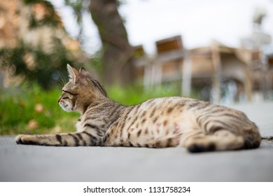 Spotted sleepy cat is lying down on a street, photo from Halkidiki, Greece (selective focus)