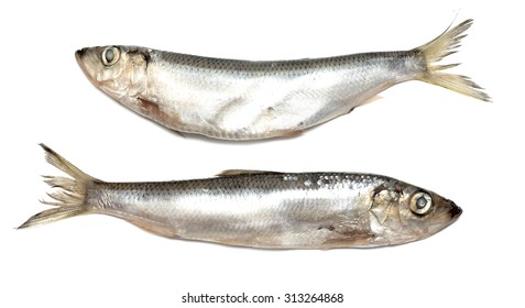 sprats fish on a white background