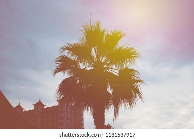 sprawling palm tree during dawn, toning