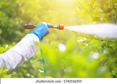 Spray ecological pesticide. Farmer fumigate in protective suit and mask lemon trees. Man spraying toxic pesticides, pesticide, insecticides