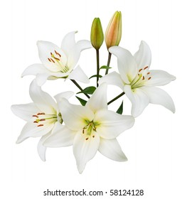 Spray of four white lilies and two buds isolated on white with clipping path.