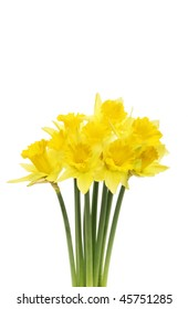 Spray of golden daffodil flowers isolated against white