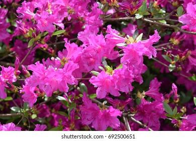 Spray of pink flowers
