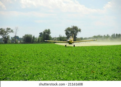 """A spray plane flies """"down in the weeds"""" while it applies a zinc mixture to potato vines to protect against Late Blight."""