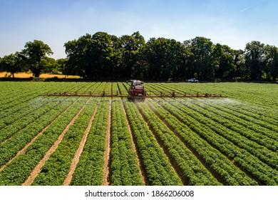 sprayer applying fungicide to a potato crop
