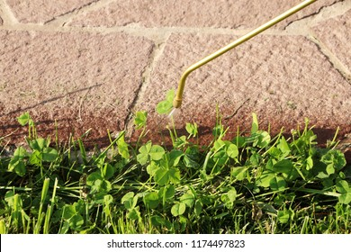Spraying the lawn with the white clover (Trifolium repens) herbicide in the garden