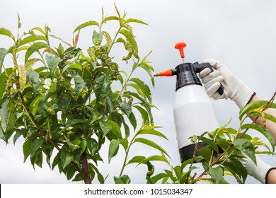 Fungicide Images, Stock Photos & Vectors | Shutterstock