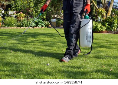 spraying pesticide with portable sprayer to eradicate garden weeds in the lawn. weedicide spray on the weeds in the garden. Pesticide use is hazardous to health. Weed control concept. weed killer.