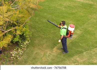 Spraying the trees