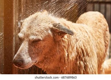 Spraying water on dog from hose. Washing dog service