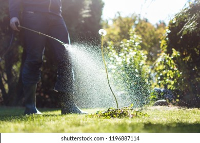 Spraying weeds in the garden