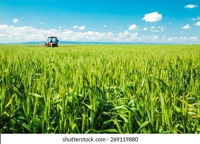 Spraying wheat crops field