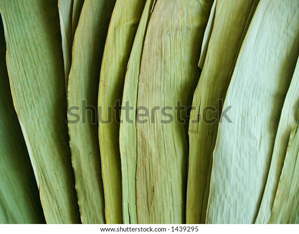 Spread fan of large, flat, dried green bamboo leaves in light and shadow.