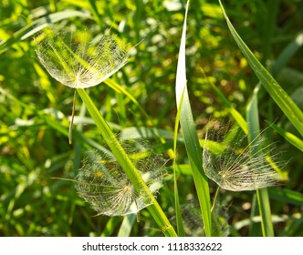 To spread to large areas of earth, plant seeds are equipped with parachutes.