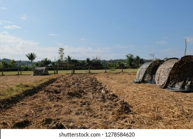 Spread the tent in the field: The rice fields after harvesting in the dry season become a place for homestay tourism.