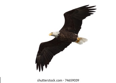 spread wing bald eagle soars across the sky, white background