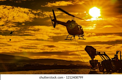spreading fertilizer with helicopters in the golden sunset.