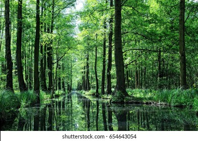 dans la forêt de Spree en Allemagne
