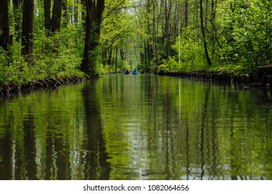 Spree river in the forest, Spreewald, Germany.