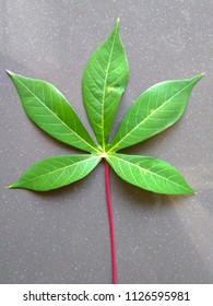A sprig of cassava leaves