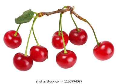 Sprig with cherries isolated on white.