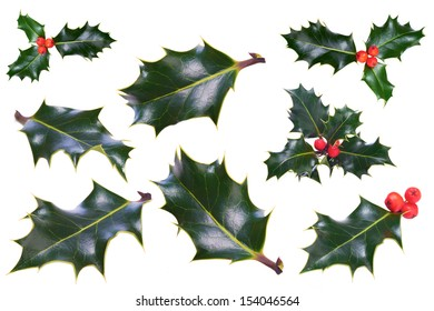 A sprig of Christmas holly on a white background.
