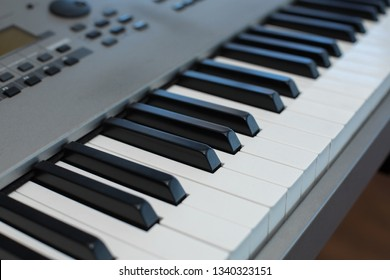 sprig of fresh lavender on the piano keys.