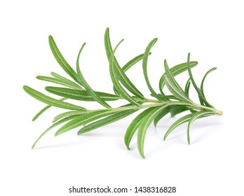 Sprig of fresh rosemary isolated on white background. Rosemary branch.