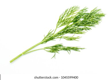 sprig of green dill on white background